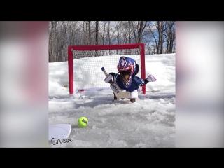 Такса играет в хоккей