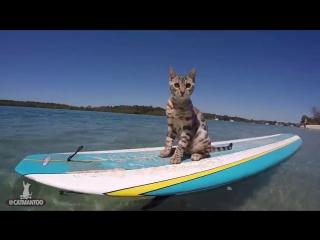 Смелый кот катается по волнам на доске
