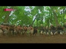 Angling Dharma Episode 55 Tipu Daya Angling Dharma Full HQ