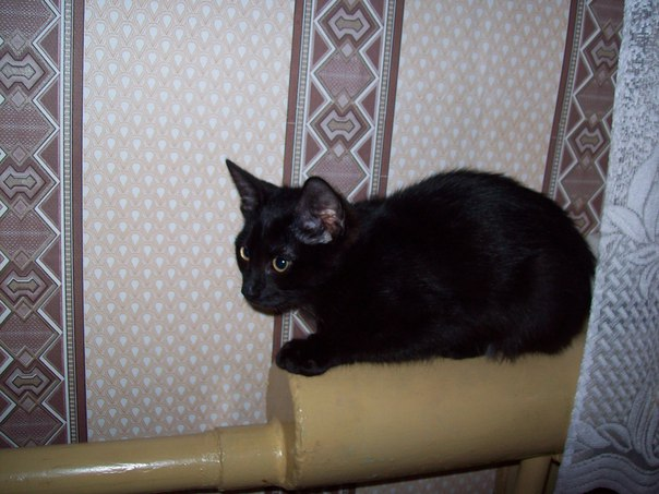 г. Иваново! всем не равнодушным! пристраивается чёрный котик,примерный