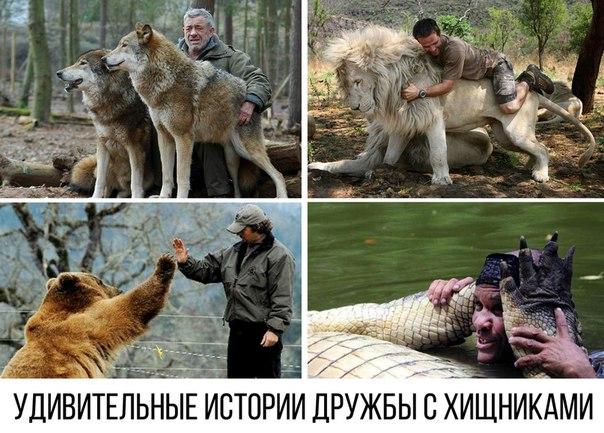 6 историй о дружбе хищных животных с человеком