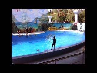 Дельфины и люди. Сочи-2015.
