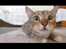 Коты и кошки - отборные приколы 2016 - 2017! Лучшие и самые смешные приколы с котами и ...
