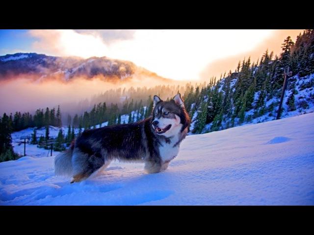🌍Природа от которой захватывает Дух 4к   Best Nature beautiful Ultra HD 4k