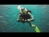 WHALE SHARK at Sail Rock (