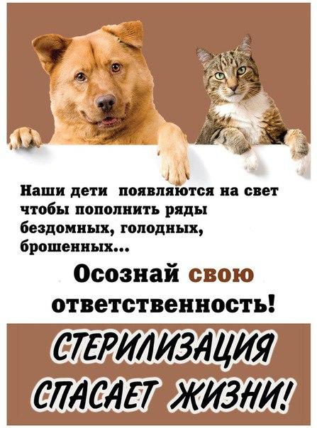 Фото №456252551 со страницы Юли Варламовой