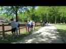 Иддилия в Эйндховене :   кони, люди ,дикие гуси и лето ))) Nederland