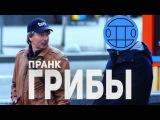 Грибы - Тает Лёд  ПРАНК