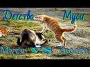 DARK STAlb - Муся против хвоста Musya against the tail