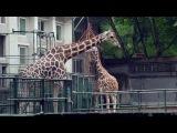 Надо видеть. Нужно знать. Шанхай #4. Зоопарк
