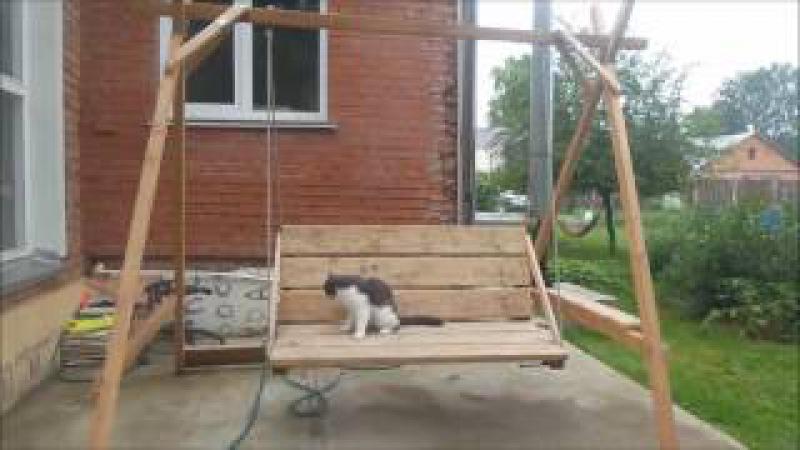 А я лягу прилягу... Веселые короткометражные истории из жизни котика Мосика