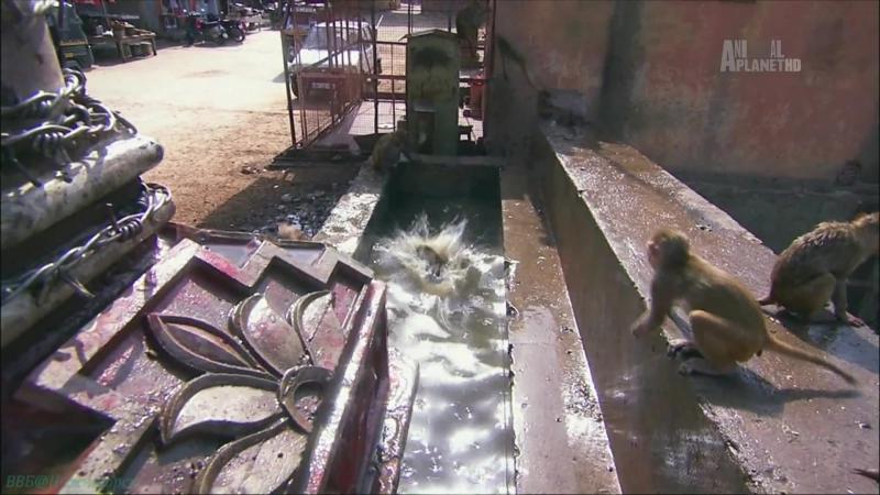 В дебрях Индии 1 Пустыня Тар Священные пески Познавательный природа животные 2011