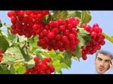 # Азамат Исенгазин -  А калина красная  #