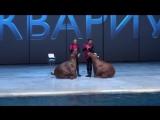 Выступление моржей (продолжение)