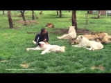 Тигр спас работника зоопарка от леопарда