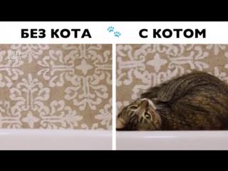 Жизнь с котом и без