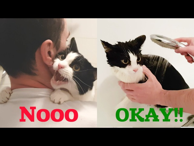 MEOW As I mewed before and during the bathing