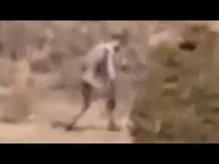 Raw: Mysterious 'man like creature' filmed in Portuguese desert