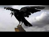 Чёрный ворон--