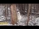 Жесткий пранк! Настоящий снежный человек