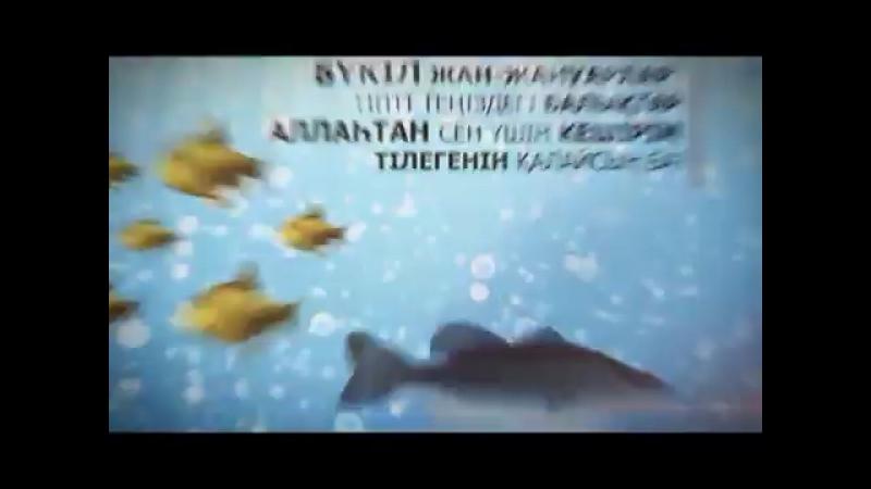 Perishteler kanatyn tosegenin kalai