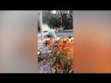 Вандал оскверняет мемориал жертвам теракта в Беслане