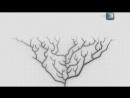NG׃ Неразгаданный мир׃ Прав ли был Дарвин (2011)