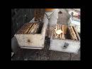 нет суши, что делать расширение гнезда у пчел одной вощиной - методика Ужакина И. В.