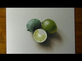 Drawing of some limes. Marcello Barenghi