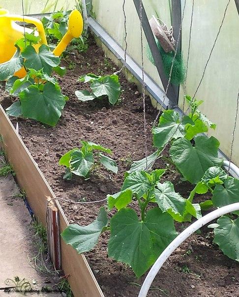 Как поливать овощи и другие огородные культуры