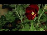 Посмотри, как красиво распускаются цветы...