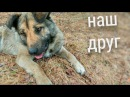 Каждой собаке палку и кость...