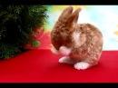 Умываются крольчата Забавные малыши декоративные кролики Питомник кроликов Зайкина усадьба Москва
