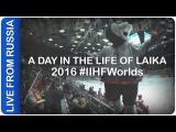A day in the life of Laika | #IIHFWorlds 2016