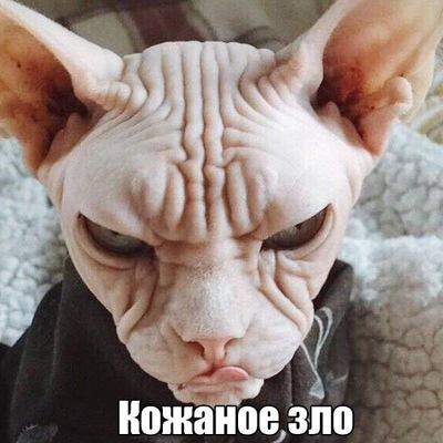 Станислав Олегович