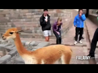 Самые смешные видео приколы с животными - супер приколы 2013 (выпуск 9)