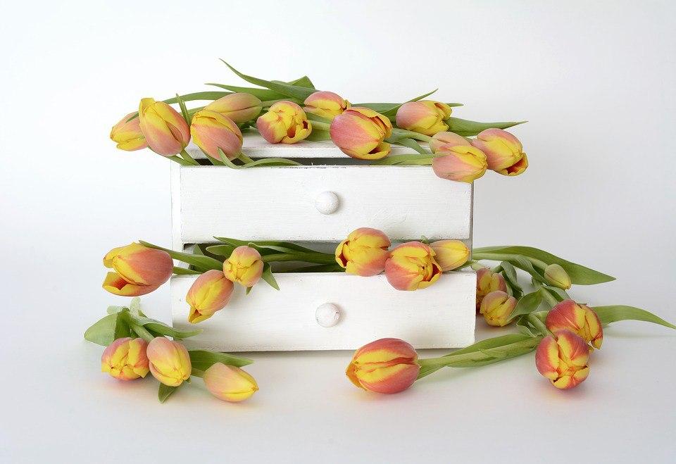 Фотоподборка №30. Тюльпаны: 20 бесплатных фотографий с весенним настроением