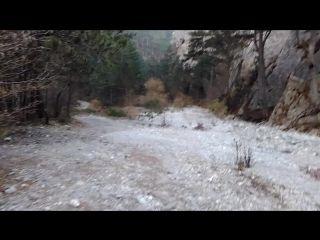 Мёртвый оленёнок