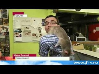 Крысы-Сапёры. Новости Африки