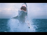 THE SHALLOWS (Отмель) Трейлер фильма # 3 - Shark Attack 2016 Eng
