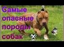 Топ 5 Самые опасные породы собак в мире