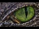 ЯЩЕР (2011) ужасы, фантастика, боевик, комедия, Воскресенье, кинопоиск, фильмы , выбор, кино, приколы, ржака, топ