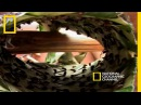 Initiation With Ants | National Geographic