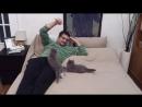Коты прыгуны