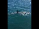 South Africa, Gansbaai Shark Alley vid. 3