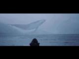 кит,небо