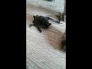 кошки поймали летучую мышь