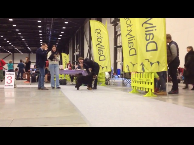 18.12.2016 Int Dog Show (CACIB-FCI ). Natali Teodorus. Bernese Mountain Dog