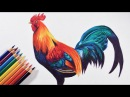 How to draw a colorful bird (Rooster) - Faber castell polychromos pencils.