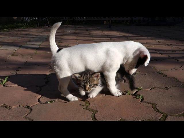 ЗАБАВНЫЙ ЩЕНОК И МИЛЫЙ КОТЁНОК. Funny cute puppy and kitten.Odessa.